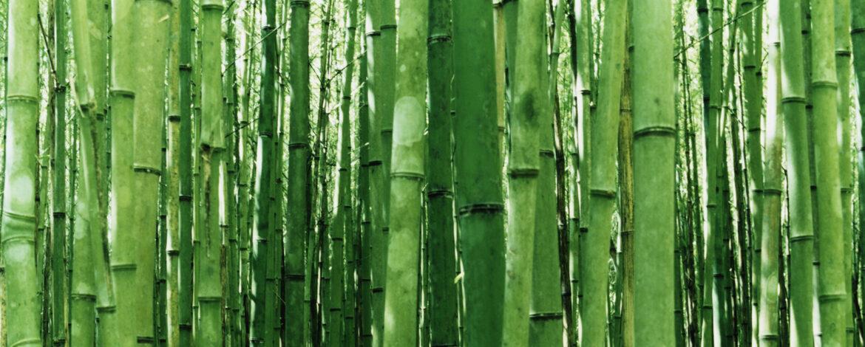 Niezwykłe właściwości tetry i wiskozy bambusowej